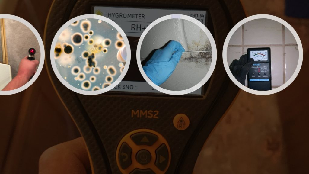 Testing for mold and mildew